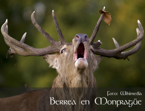 The Bellowing of the Deer in Extremadura