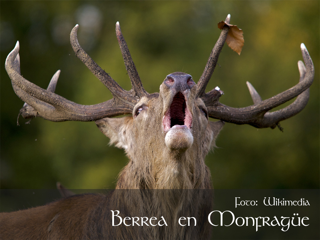 Berrea